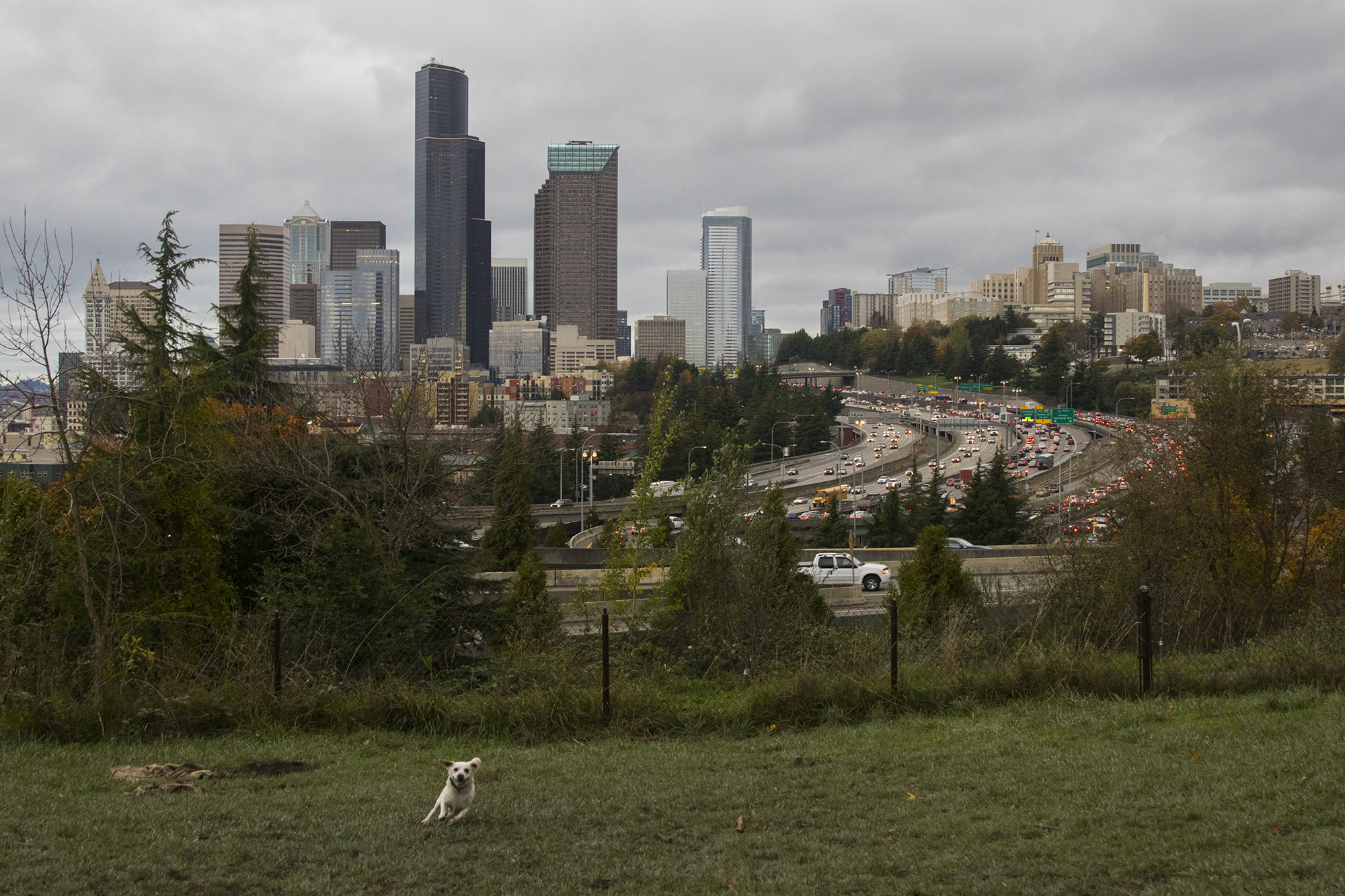 A Dog\'s Guide To Seattle