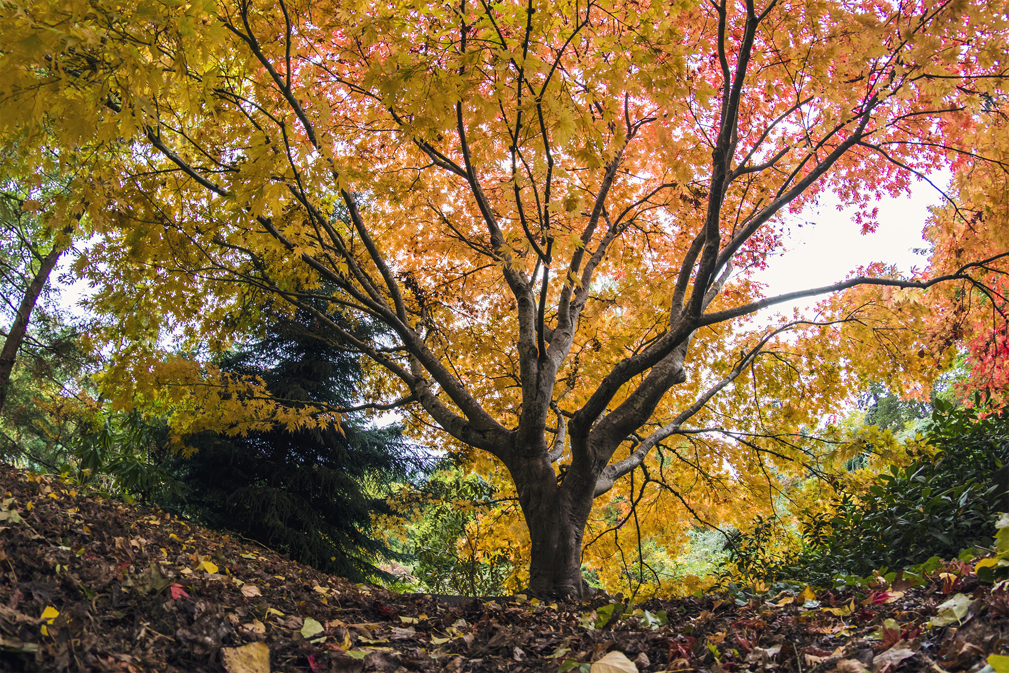 Fall Colors In Seattle