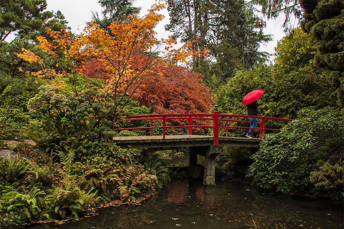 Your Guide To Fall In Seattle